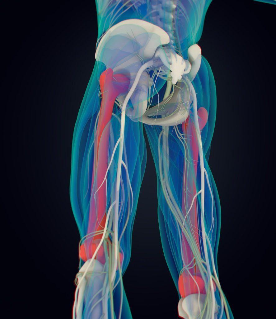 Femur bone. Human anatomy. 3D illustration | RunIreland.com